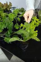 Eco-canje: llevá residuos orgánicos a cambio de un plantín