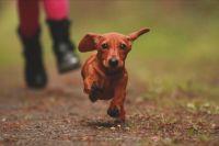 La llegada de la Primavera es el momento ideal para practicar ejercicios con tu perro