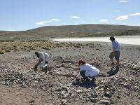 Obtienen el primer registro de comportamiento social complejo en una especie primitiva de dinosaurio