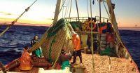 Pobreza y descarte de pescados al mar