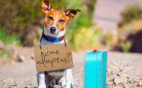 Nueva jornada de adopción de animales